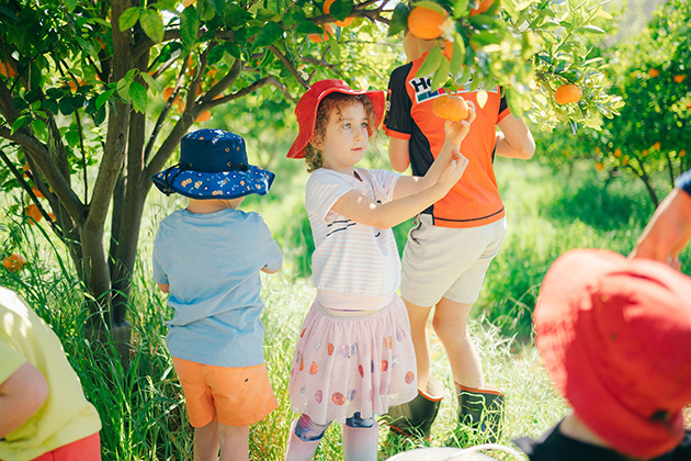 Kids picking oranges in an orchard