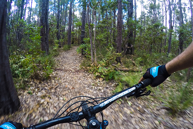 Person riding mountain bike in forest